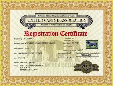 UCA Photo Certificate