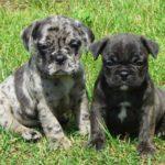 Frug Pups